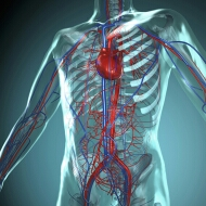 alternativ-gyogymod-sziv-er-nyirokrendszer-gondokra